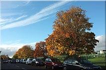 SX9065 : Autumnal trees, Cricketfield Road by Derek Harper