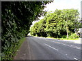 ST2483 : Tree-lined part of the A48, Castleton by Jaggery