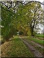 SE8442 : Harswell Lane, near Shiptonthorpe by Paul Harrop