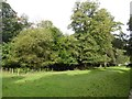 SD4984 : View across the ha-ha, Levens Hall garden by David Smith