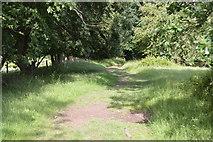 TQ5445 : Path to Leigh by N Chadwick