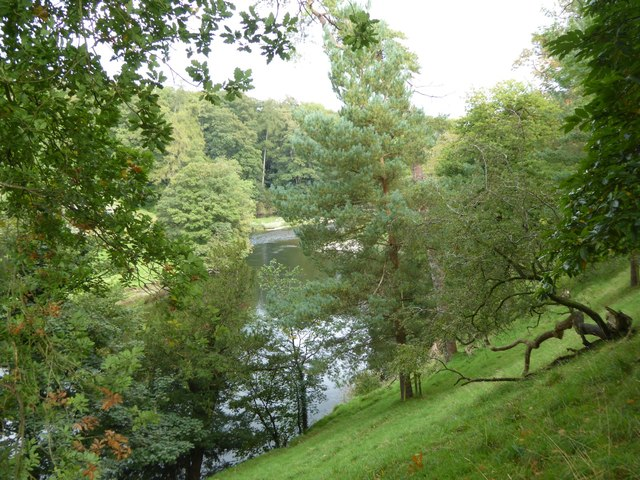 Trees on the steep east bank of River Kent, Levens Park