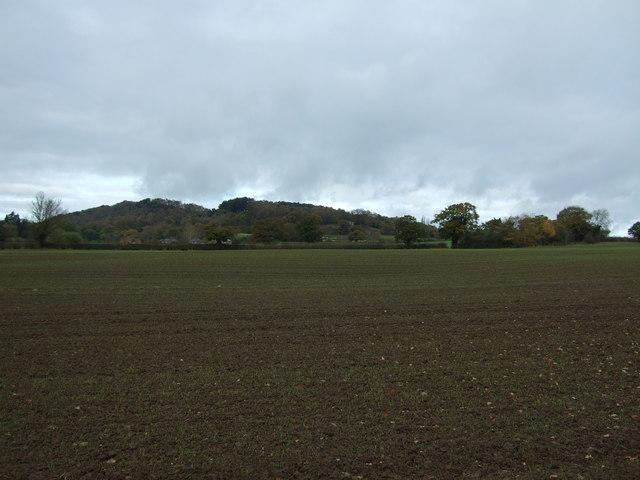 Young crop field, Bickerton