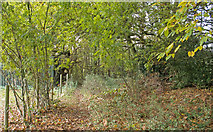 TQ5193 : The top of Bower Wood, Havering-atte-Bower by Roger Jones