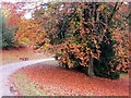 SE2768 : Autumn  leaves  Studley  Royal  Water  Garden by Martin Dawes