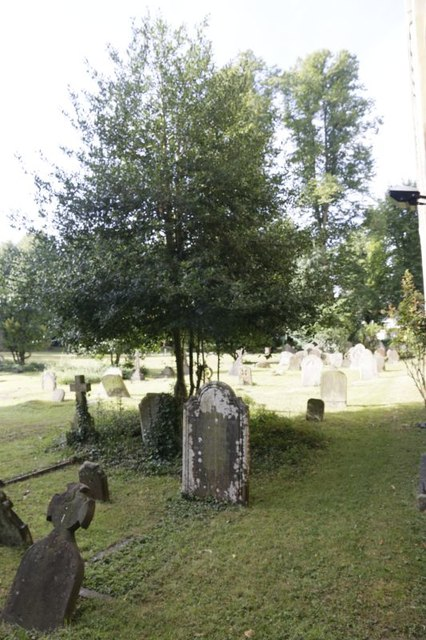 Sapling in the Graves