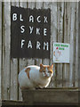 SD3489 : Guard cat, Black Syke Farm by Karl and Ali