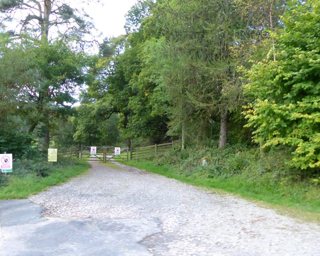 Track into forest north of Low Bowkerstead