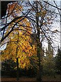 NS5666 : Gilmorehill in Autumn by Anne Burgess