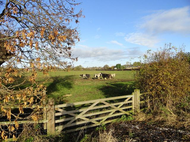 Horses at Lamesley