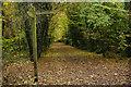 TL2313 : Ayot Greenway, Sherrardspark by Stephen McKay