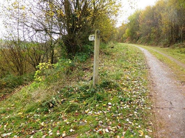 Track through Llanthony Wood