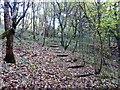 SJ8450 : Steps in Bradwell Woods by Jonathan Hutchins