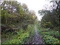SJ8450 : Footpath in Bradwell Woods by Jonathan Hutchins