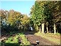 SD3678 : Bridleway heading north through Yaw Yeat Wood by Christine Johnstone
