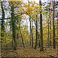 TQ5492 : Hatter's Wood, The Manor Nature Reserve, Harold Hill by Roger Jones
