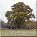 TQ5593 : Group of trees in Dagnam Park, The Manor Nature Reserve, Harold Hill by Roger Jones