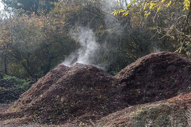 Steaming Compost, Trent Park, Enfield