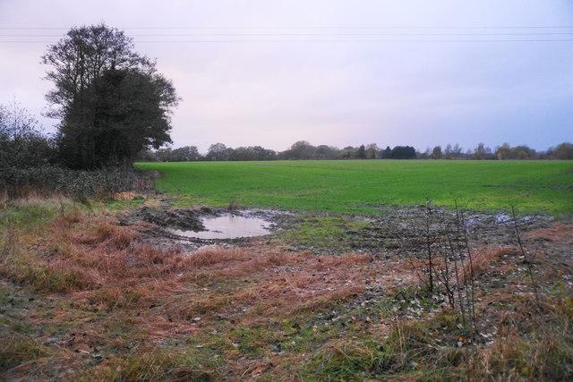 Field by Lawn Lane