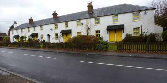 Yellow on white panorama