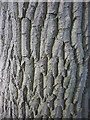 SD4974 : The bark of an ash tree by Karl and Ali