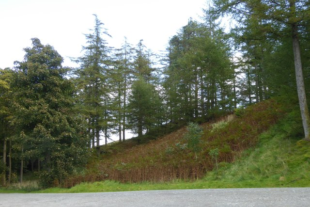 Bracken and trees at High Cross, Hawkshead