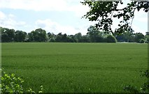 TQ5044 : Arable land near The Slips by N Chadwick