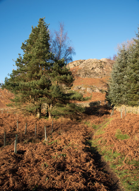 Bridleway heading towards Ivy Crag