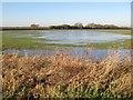 SH9976 : Flooded field by Jonathan Wilkins