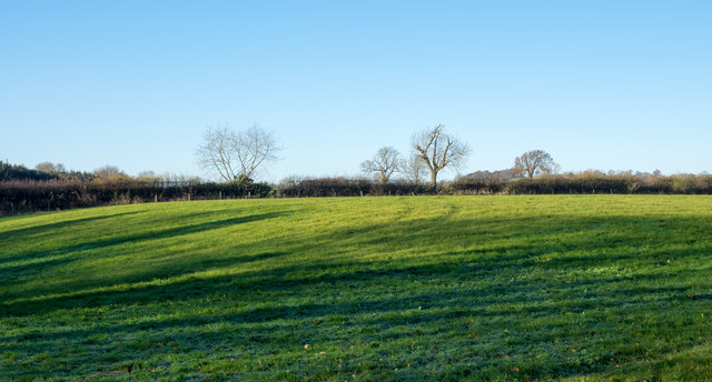 Grassed field with tree shadows