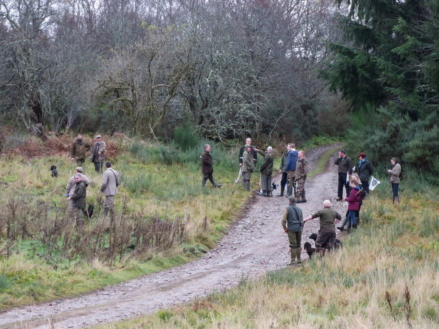 A confusion of Beaters on Stoney Brae