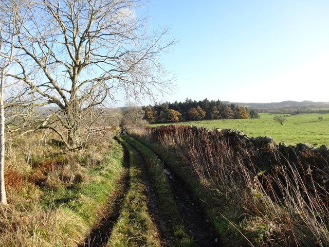 By-Way Towards Black Byre Plantation