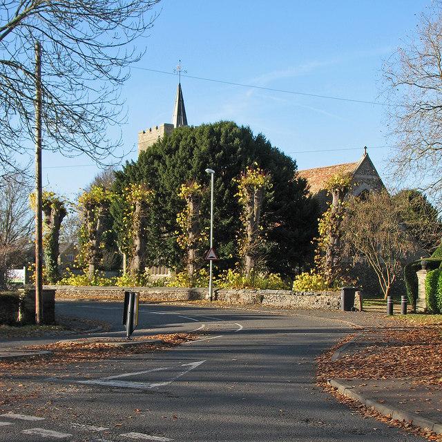 Little Shelford: pollarded trees and All Saints' Church