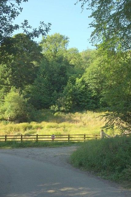 Lane near Gunveor Plantation