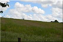 TQ5045 : Meadow near Chiddingstone by N Chadwick