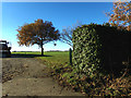 TM3074 : Footpath off Heveningham Road by Adrian Cable