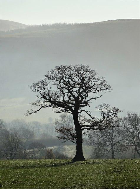 Tree near Upper Hurst