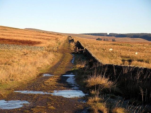 Track near The Pike