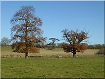 SO8845 : 'Capability' Brown's work by Philip Halling