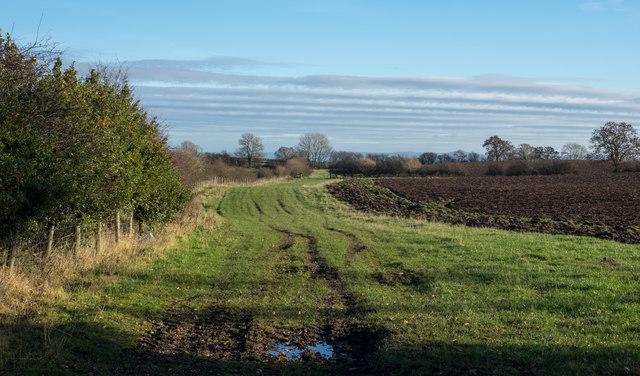 Field headland on east side of Walworth Road
