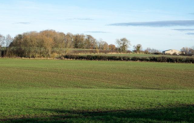 Coatsay Moor