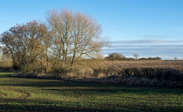 Hedge with two fields