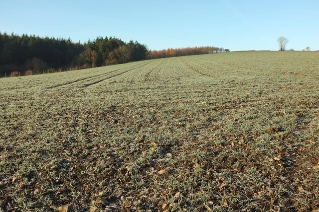 Frosty field by Hansford Wood