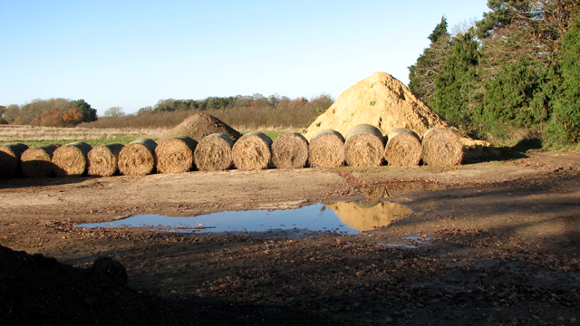 Straw bales all lined up