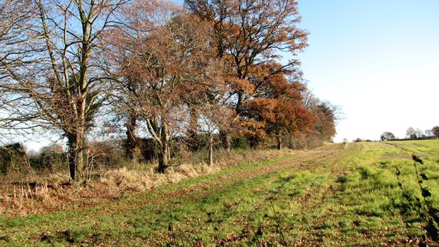 Fields by Stone Lane