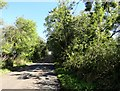 NZ0557 : Looking east along Lead Lane by Robert Graham