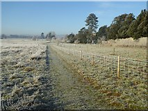 SO8844 : Frosty morning in Croome Park by Philip Halling