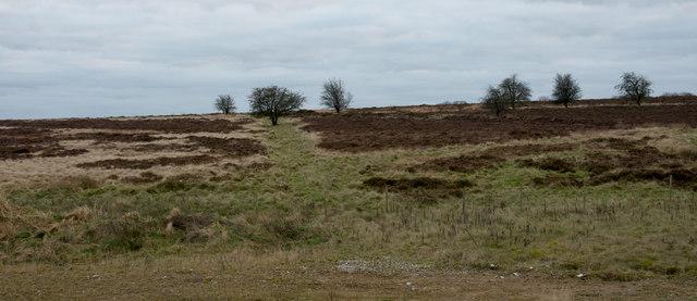 Moorland at south side of Longstone Moor