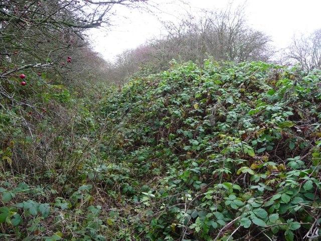 Former towpath, Dearne & Dove Canal [2]