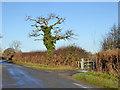 SP6224 : Wayside oak by Robin Webster